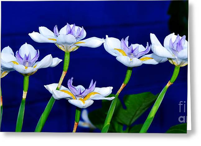 Yellow Stamen Greeting Cards - Dainty White Irises all in a Row Greeting Card by Kaye Menner