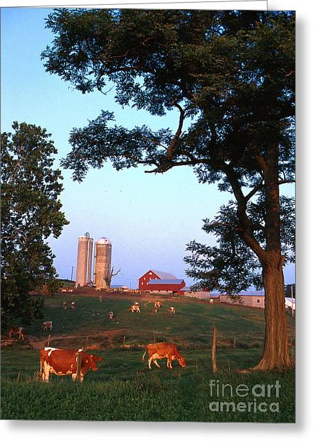 Dairy Farm Greeting Card by Photo Researchers