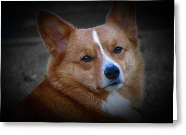 Guard Dog Greeting Cards - Daisie Our Corgi Greeting Card by David Dehner