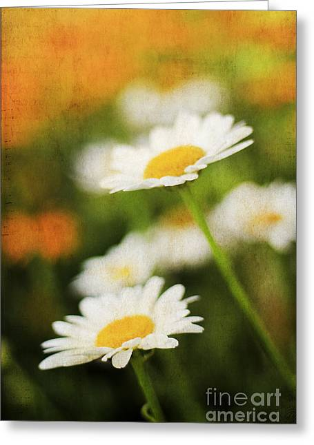 Pasture Herb Greeting Cards - Daisies Greeting Card by Darren Fisher