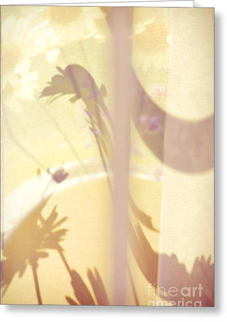 Curvy Beauty Greeting Cards - Daisies Greeting Card by HD Connelly