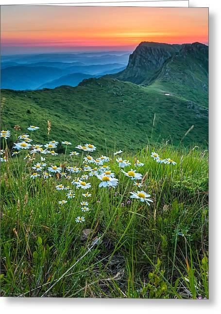 Balkan Greeting Cards - Daisies in the Mountyain Greeting Card by Evgeni Dinev