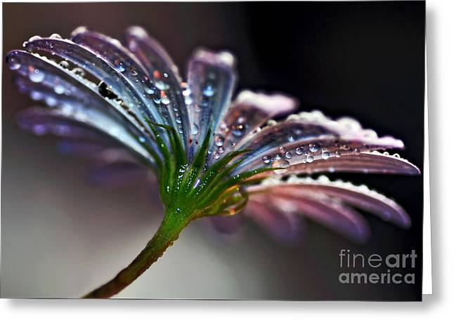 Daisy Abstract With Droplets Greeting Card by Kaye Menner
