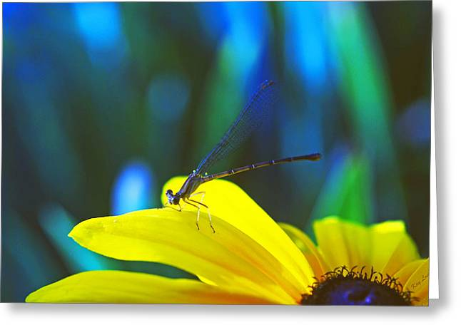 Kay Lovingood Greeting Cards - Daisy and Dragonfly Greeting Card by Kay Lovingood