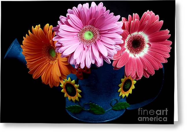 Daisy Can Greeting Card by John Rizzuto