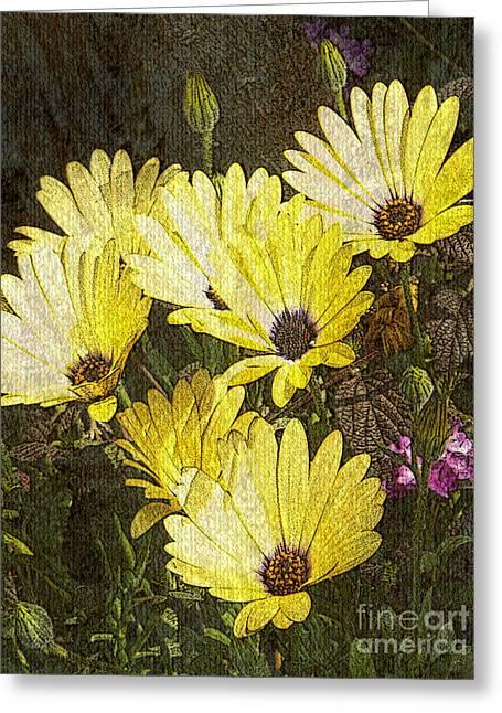 Tom Romeo Greeting Cards - Daisy Daisy Greeting Card by Tom Romeo