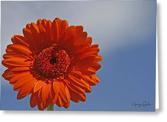 Apricot Greeting Cards - Daisy Days Greeting Card by Nomad Art And  Design