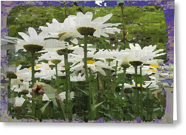 Light Blue Grey Greeting Cards - Daisy Fields Forever Greeting Card by Tim Allen