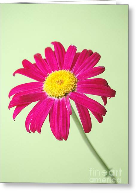 Imperfect Greeting Cards - Daisy Greeting Card by HD Connelly
