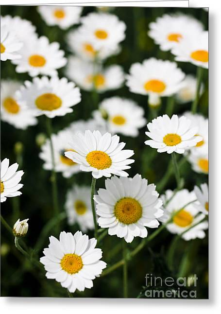 Daisy In A Field Greeting Card by Simon Bratt Photography LRPS