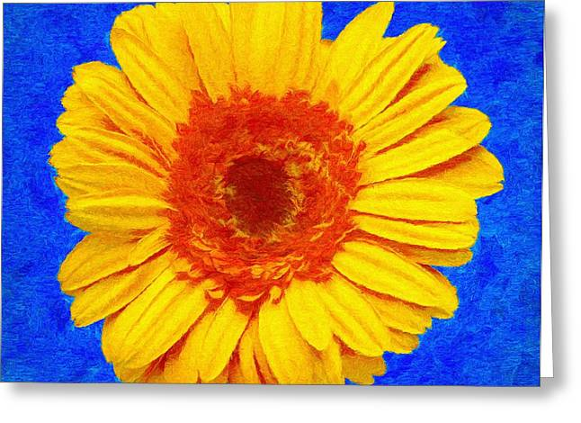 Gerbera Greeting Cards - Daisy Greeting Card by Jeff Kolker