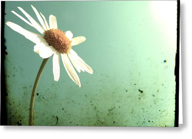Daisy Greeting Cards - Daisy Greeting Card by Marianna Mills