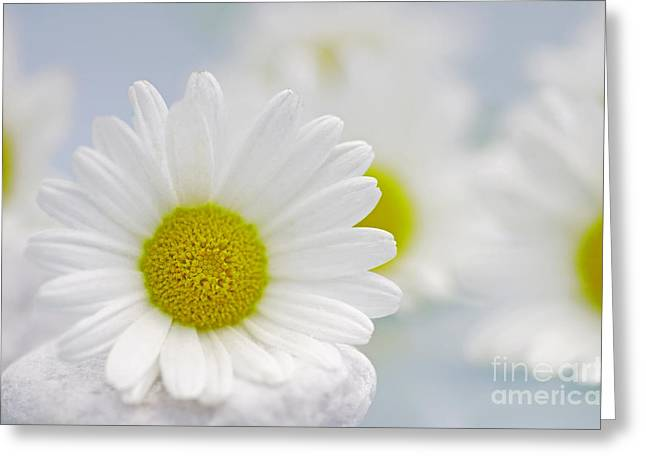 Entspannung Greeting Cards - Daisy Sky Greeting Card by Tanja Riedel