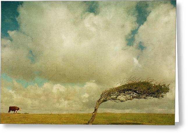 Daisy Spots A Tree Greeting Card by Paul Grand