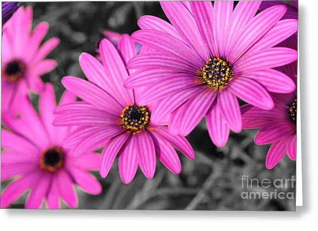 Yellow Stamen Greeting Cards - Daisy Steps Greeting Card by Kaye Menner