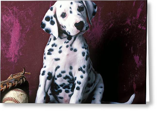 Dalmatian puppy with baseball Greeting Card by Garry Gay