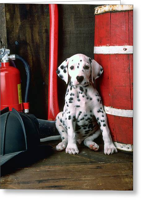Spots Greeting Cards - Dalmatian puppy with firemans helmet  Greeting Card by Garry Gay