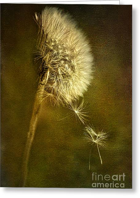 Dance Dandelions Dance Greeting Card by Sari Sauls