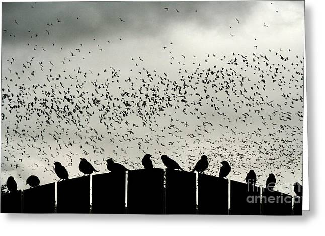 Migration Greeting Cards - Dance of the Migration Greeting Card by Jan Piller
