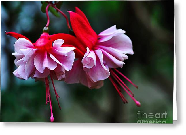 Dancing Petals Greeting Cards - Dancing Ladies Greeting Card by Kaye Menner