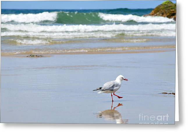 Aquatic Bird Greeting Cards - Dancing on the Beach Greeting Card by Kaye Menner