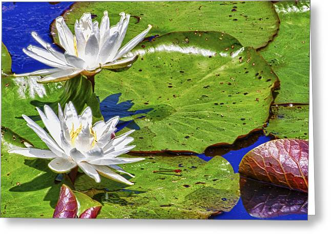 Water Lilly Greeting Cards - Dancing on the Water Greeting Card by Forest Alan Lee