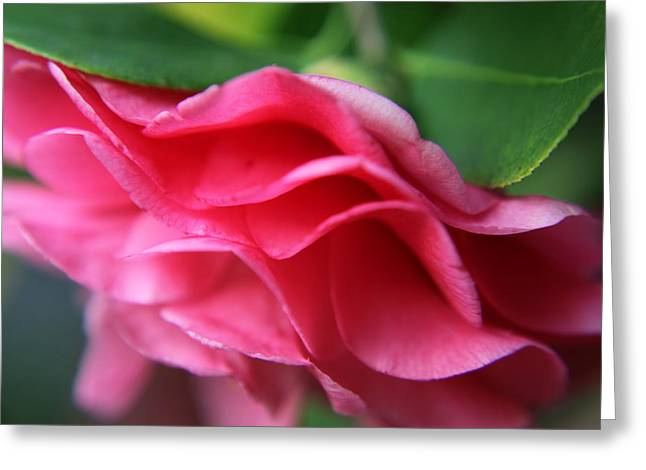 Dancing Petals of the Camellia Greeting Card by Enzie Shahmiri