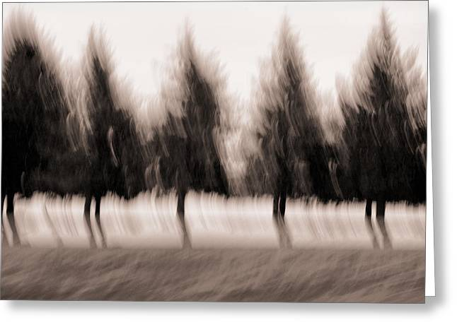 Blurry Greeting Cards - Dancing Pines Greeting Card by Carol Leigh