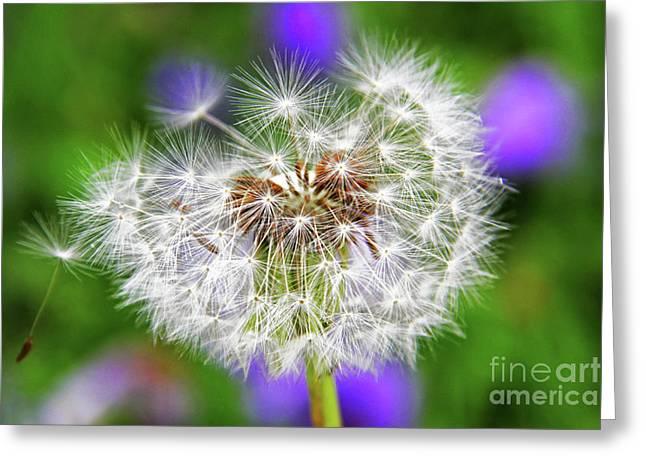 Uci Greeting Cards - Dandelion Flower Greeting Card by Mariola Bitner