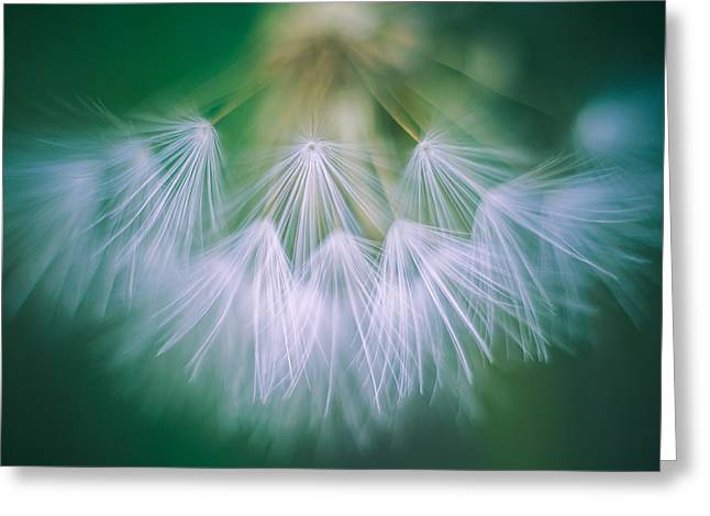 Pacific Crest Trail Greeting Cards - Dandelion I Greeting Card by Alexander Kunz