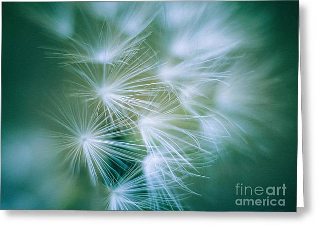 Pacific Crest Trail Greeting Cards - Dandelion II Greeting Card by Alexander Kunz