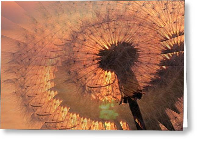 Dandilion Greeting Cards - Dandelion Illusion Greeting Card by Tim Allen