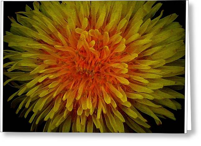 Mikki Cucuzzo Greeting Cards - Dandelion Greeting Card by Mikki Cucuzzo