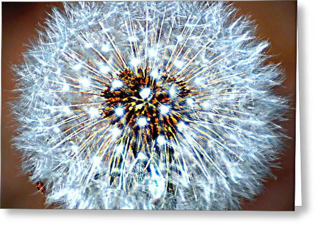 Dandelion Seed Greeting Card by Marty Koch