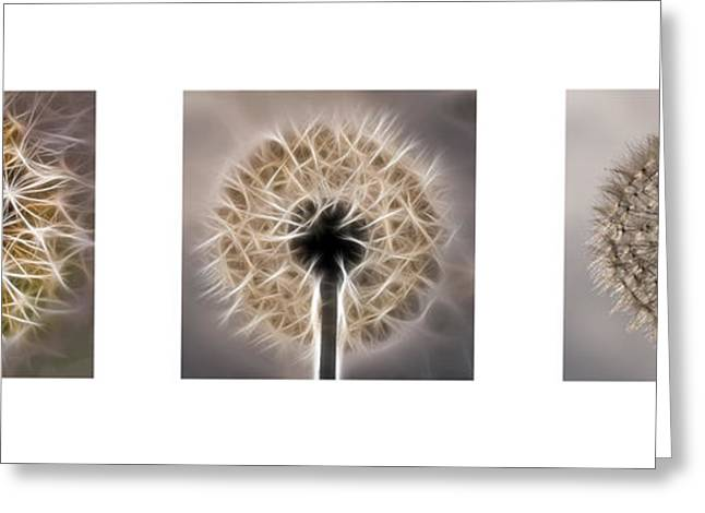 Fractalius Greeting Cards - Dandelion Triptych Greeting Card by Louis Dallara