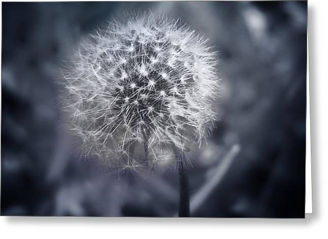 Dandilion Greeting Cards - Dandilion Greeting Card by Bill Cannon