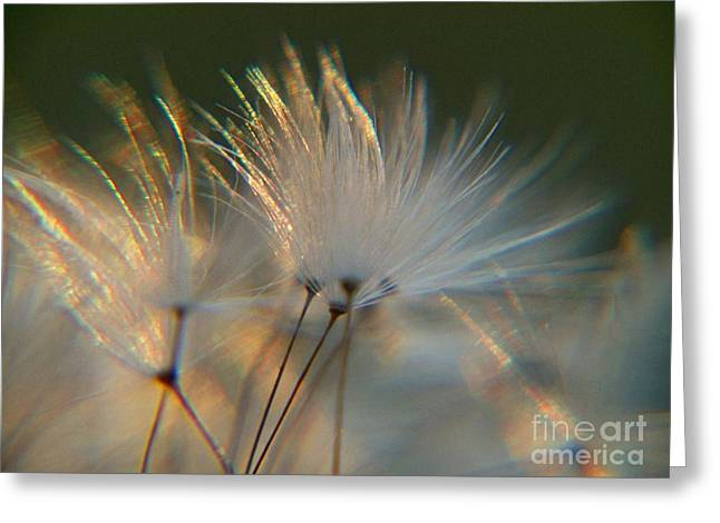 Dandilion Greeting Cards - Dandilion Breeze Greeting Card by Sally Siko
