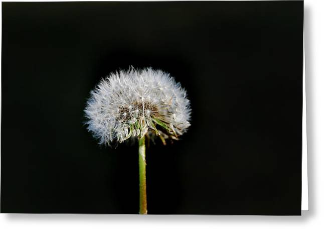 Lawns Fields Greeting Cards - Dandy Greeting Card by Skip Willits
