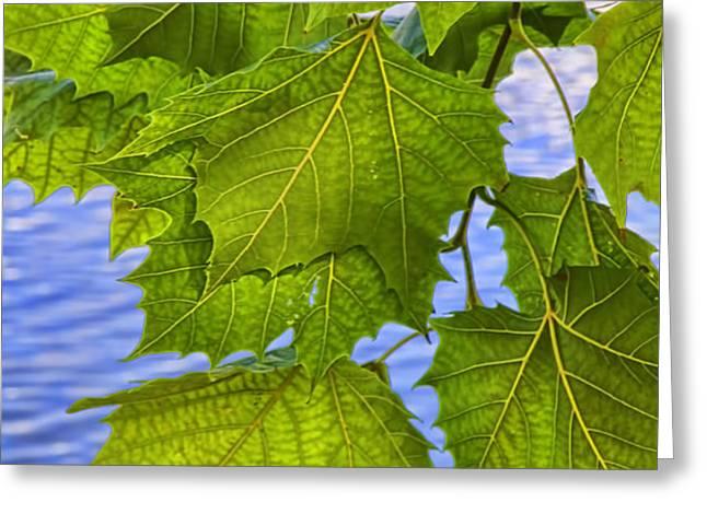 Dangling Leaves Greeting Card by Deborah Benoit