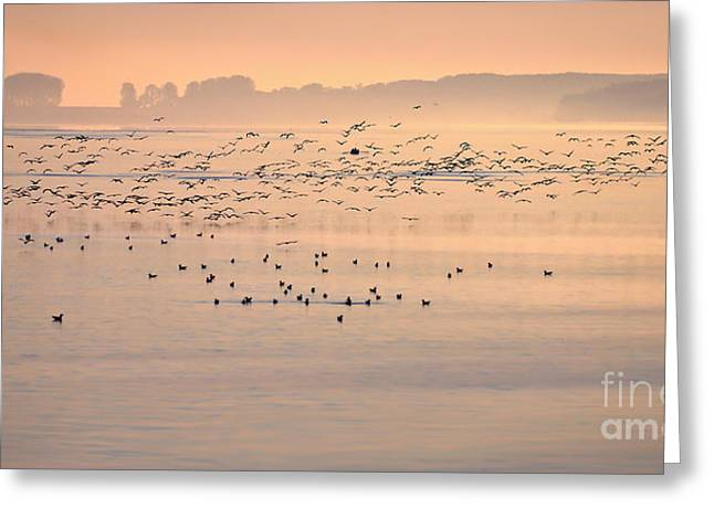 Foggy Beach Digital Art Greeting Cards - Danube River-sunrise Greeting Card by Evmeniya Stankova