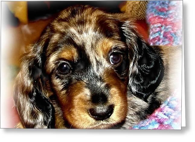 Dapple Dachshund Pup Greeting Card by Victoria Sheldon