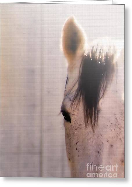 Quarterhorses Greeting Cards - Dapple Devotion Greeting Card by Betty LaRue