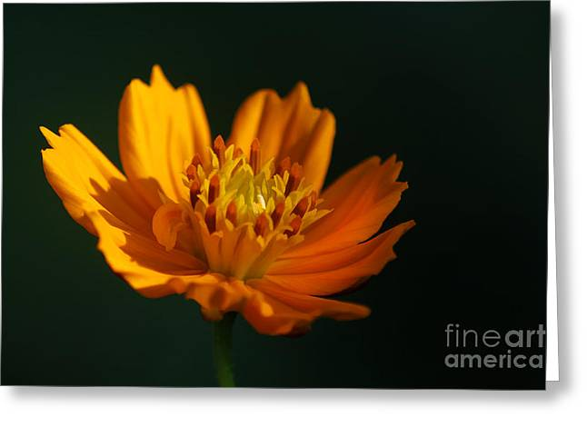 Aster Greeting Cards - Dappled in the Morning Light Greeting Card by Darren Fisher