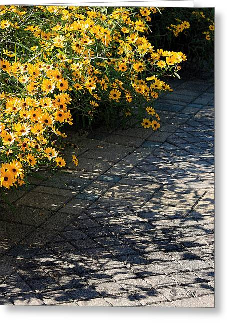 Dappled Light Greeting Cards - Dappled Light Greeting Card by Suzanne Gaff