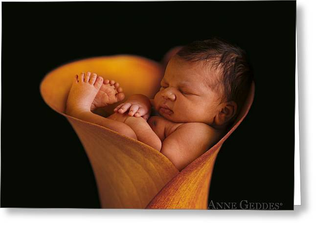 Lilies Greeting Cards - Darion in Calla Lily Greeting Card by Anne Geddes