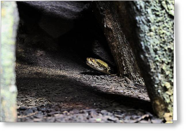 Canebrake Greeting Cards - Dark and Dangerous Places Greeting Card by JC Findley