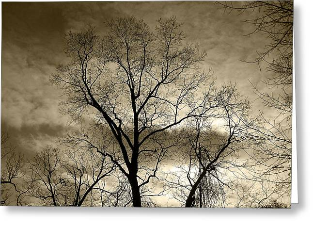 Mohawk Park Greeting Cards - Dark and Stormy Night Trees in Sepia Greeting Card by Corinne Elizabeth Cowherd