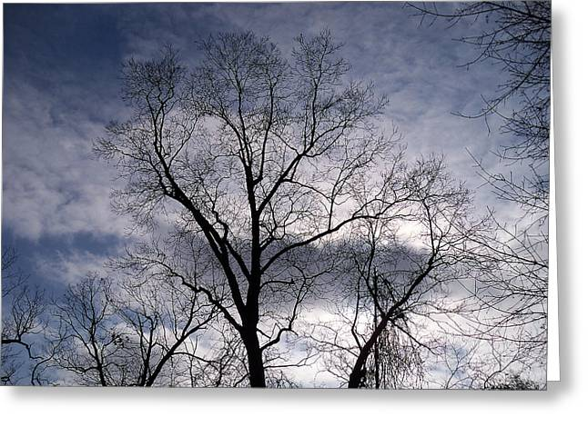 Mohawk Park Greeting Cards - Dark and Stromy Night Trees Greeting Card by Corinne Elizabeth Cowherd