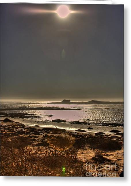Ano Nuevo Photographs Greeting Cards - Dark Day Greeting Card by John Lamb