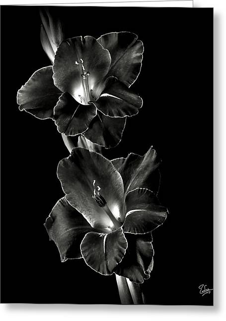 Dark Gladiolas In Black And White Greeting Card by Endre Balogh